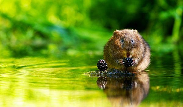 1421529925291 - عکسهایی از حیوانات بسیار زیبا و تماشایی