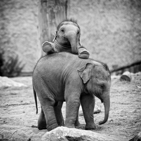 1421530021154 - عکسهایی از حیوانات بسیار زیبا و تماشایی