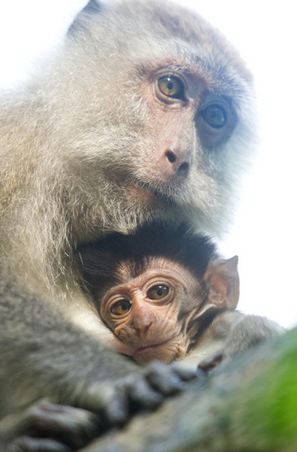 1421530110871 - عکسهایی از حیوانات بسیار زیبا و تماشایی