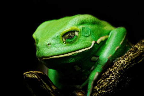 1421530111012 - عکسهایی از حیوانات بسیار زیبا و تماشایی