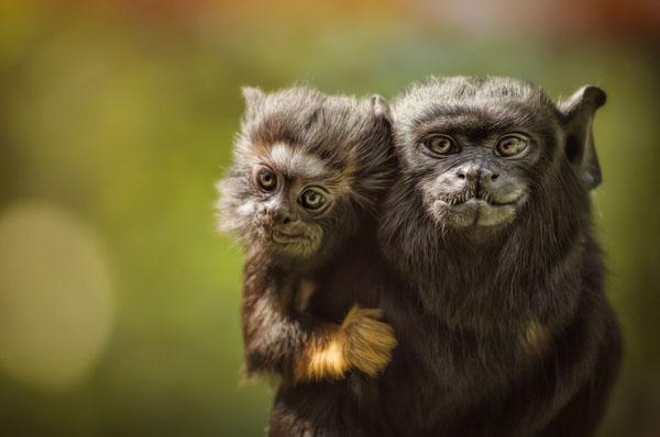 1421530111375 - عکسهایی از حیوانات بسیار زیبا و تماشایی