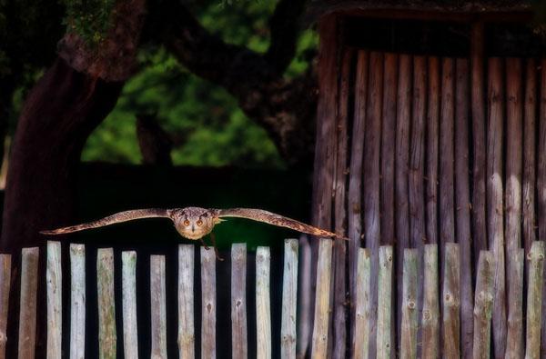 1421530178252 - عکسهایی از حیوانات بسیار زیبا و تماشایی
