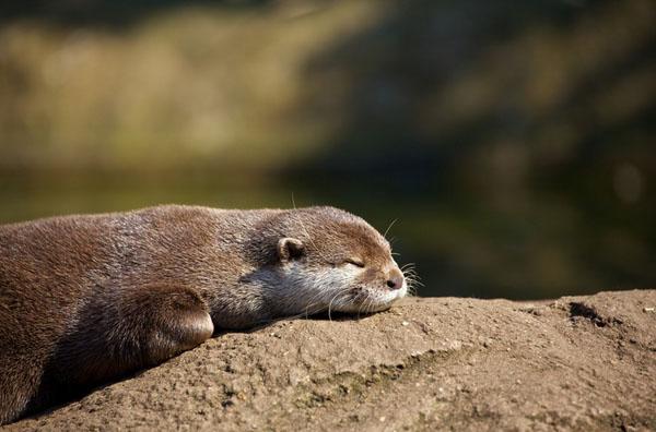 1421530178363 - عکسهایی از حیوانات بسیار زیبا و تماشایی