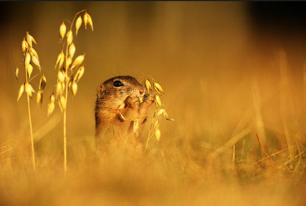 1421530178464 - عکسهایی از حیوانات بسیار زیبا و تماشایی