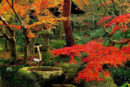 1434926409235 - زیباترین باغهای جهان